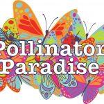 Pollinator paradise