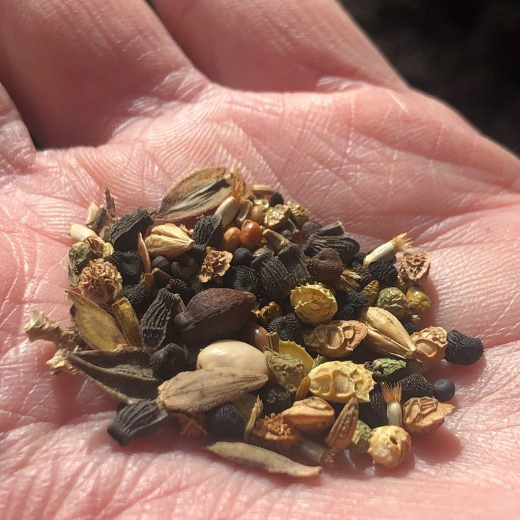open hand with assorted seeds